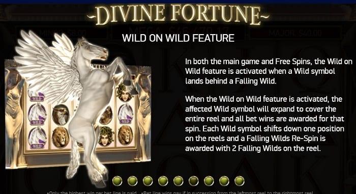 Wild on Wild
